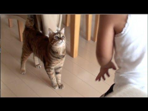 子どもとめっちゃ楽しそうに遊ぶ猫