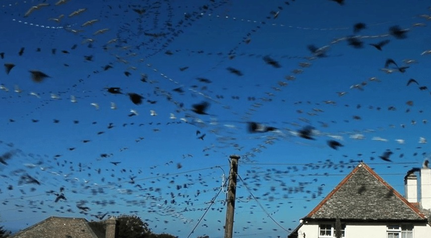 1時間のうちに飛んだ鳥を、一度にまとめて飛んだように編集したらとんでもない数だった!!