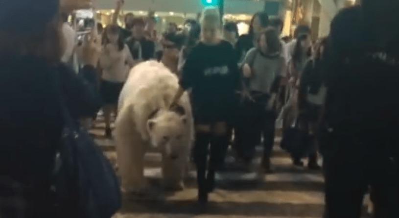 謎の美女が渋谷のど真ん中で巨大シロクマを散歩し、一時パニックに!!