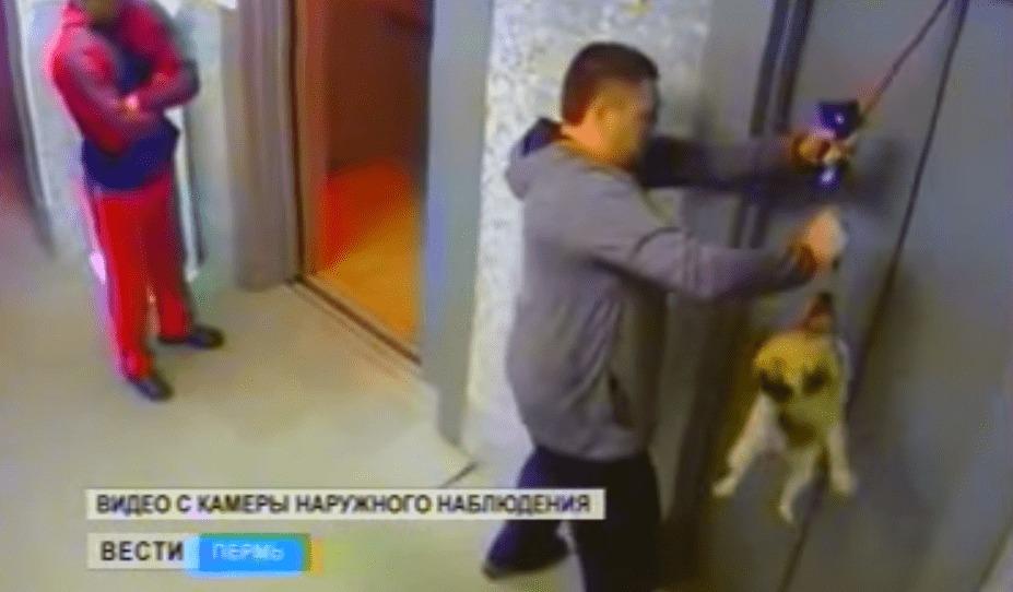 犬の綱が挟まったままエレベーターが上昇!居合わせた男性のとっさの機転で助かる!!