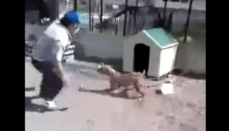 吠えまくる犬をおちょくって、はしゃいでいた男を襲った痛恨の結末wwwwwww