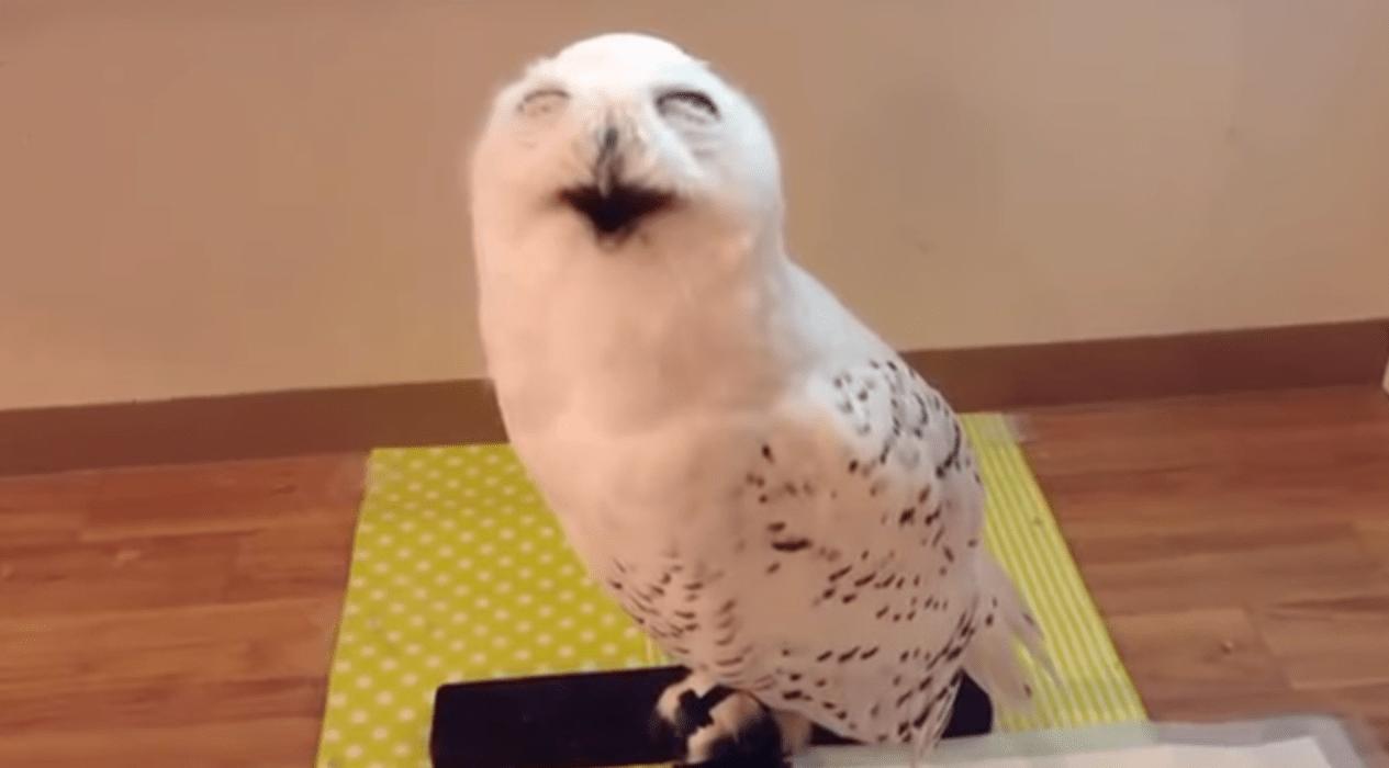 人間みたいに「ニヤー」っと笑う、いつも笑顔で出迎えてくれるフクロウ!!!