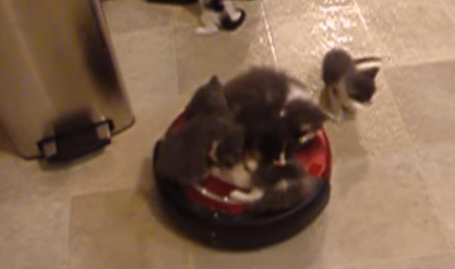 たくさんの子猫がルンバで逆椅子取りゲーム!振り落とされたら負け!!