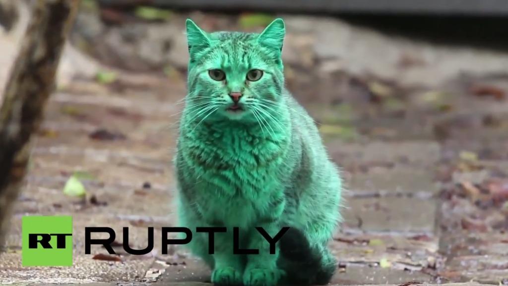 ブルガリアで緑色の猫が発見され話題になっている