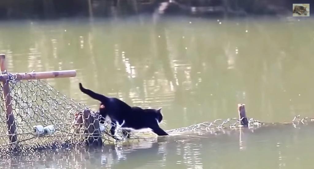 まるで猫版SASUKE!不可能だと思われた水上コースを執念でクリアした気合の入った猫!!