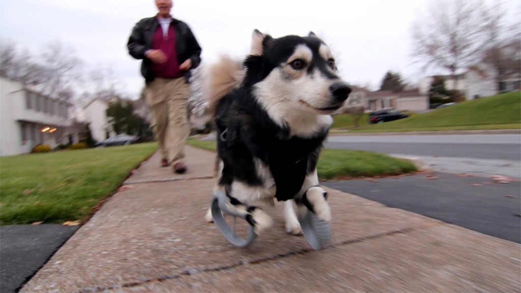 【感動】3Dプリンターの義足を作ってもらった犬が、生まれて初めて全力で走り喜ぶ姿!!