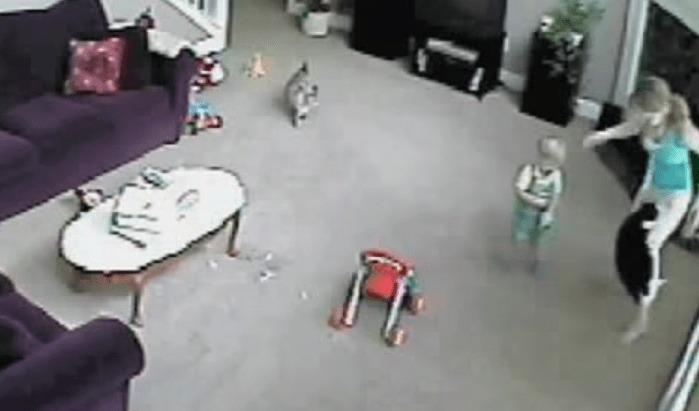 赤ちゃんがベビーシッターに襲われたと思い、身を挺して守ろうとする猫!!