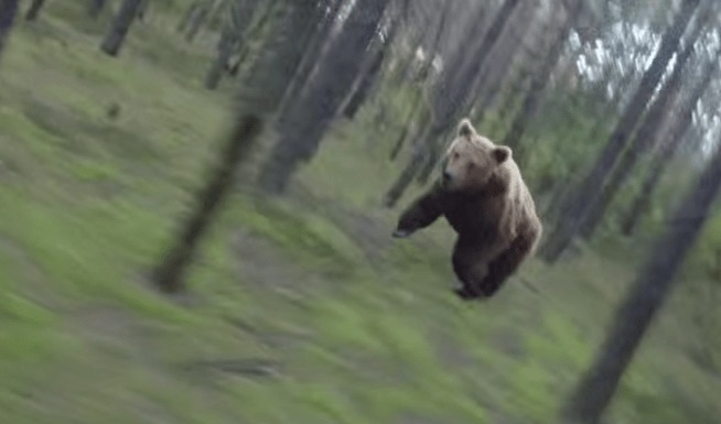 【恐怖】林道をサイクリングしていたら、巨大ヒグマが出現!いつまでもしつこく追いかけくる緊迫の映像!!