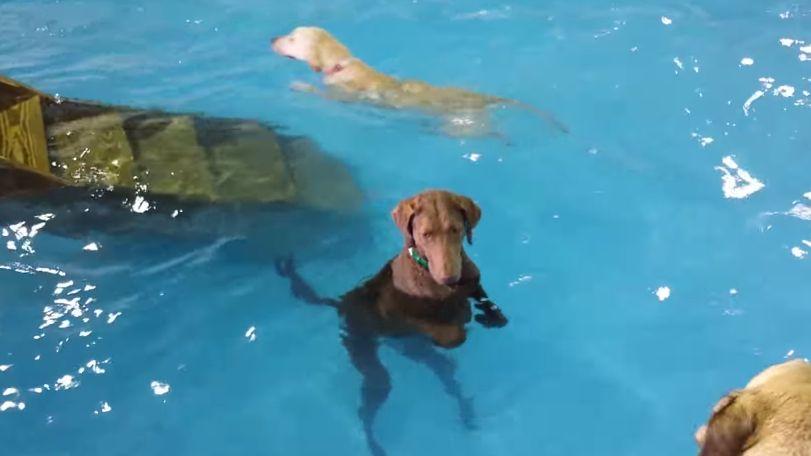 他の犬が一生懸命泳ぐ中、一匹だけズルしてるやつがいるwwwww
