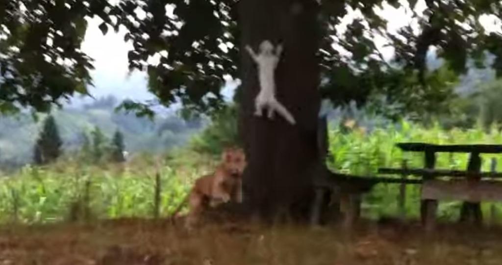 犬に追いかけられた猫が、忍者のような身のこなしでかわして勝利!!