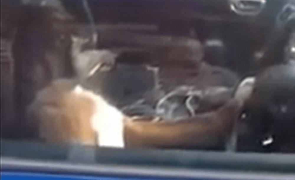 車内に犬を一匹で放置してはいけない理由!?