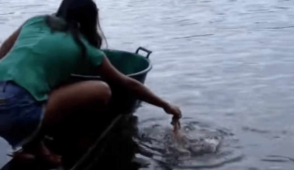 ブラジルでは、こうやってピラニアが釣れる!お肉に群がるピラニアたち!!