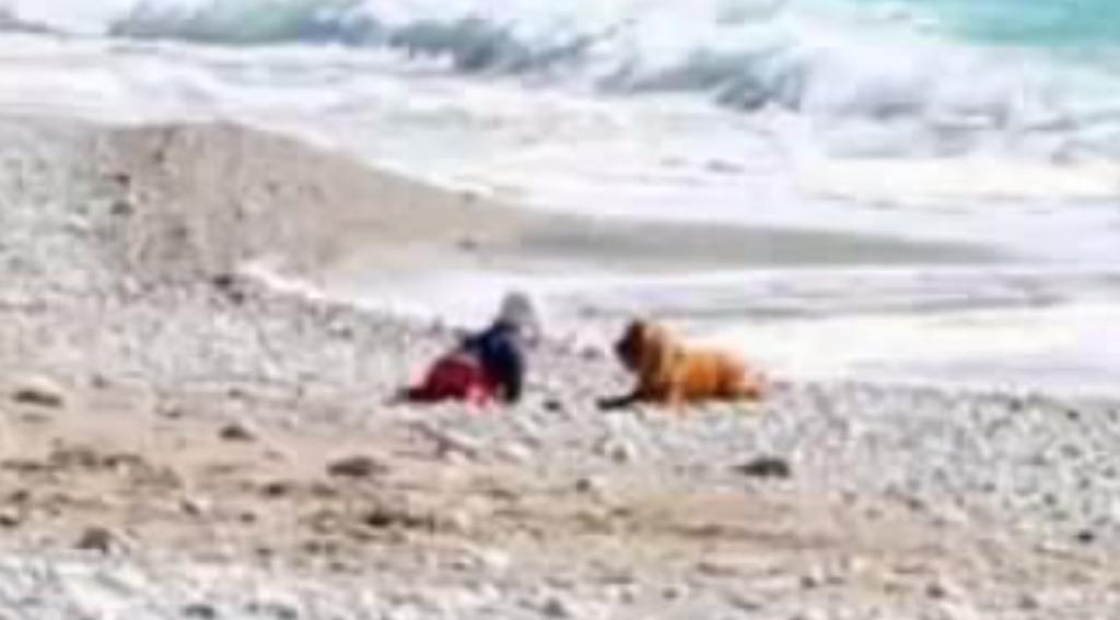 お手柄!一人で荒ぶる海に近づいた赤ちゃんを制止させた犬!!