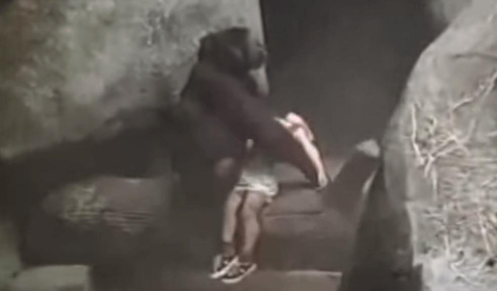 檻に落ちてしまった人間の子供を、他のゴリラから守り助けたゴリラ!!