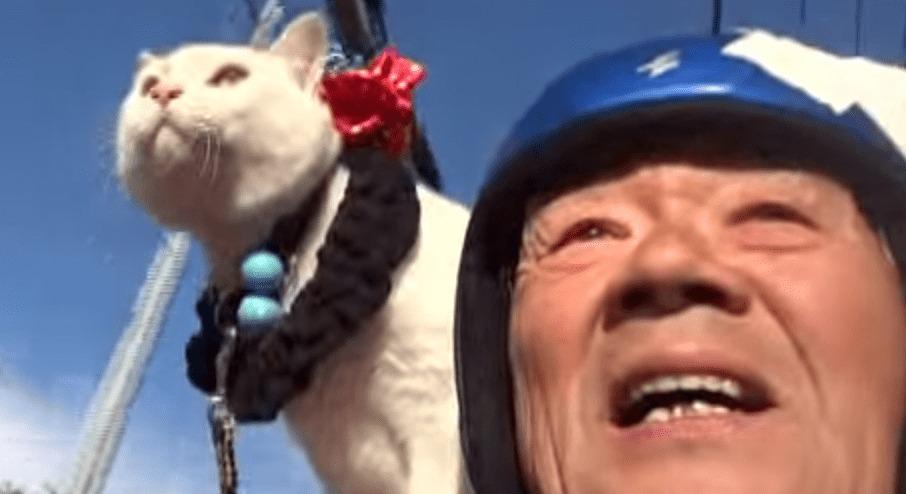 ほっこり幸せ気分♪肩乗り猫とおじいちゃんのショート映像が癒しMAX!