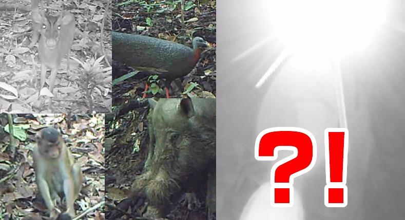 ボルネオ島の多様な野生生物を撮影するために設置された無人カメラ。しかし、最後に映ってはいけない衝撃的なものが。。。