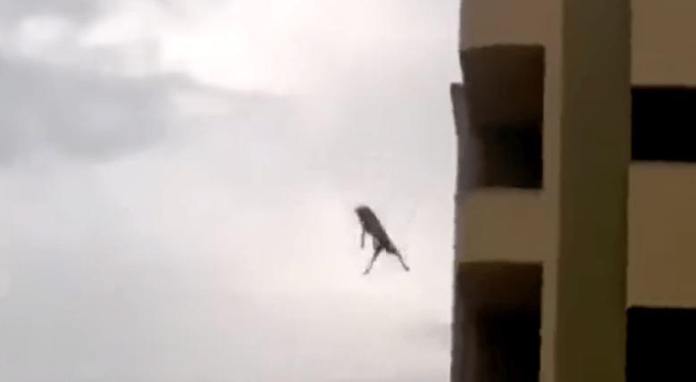 【奇跡】ビルの4階から飛び降りた犬、何事も無かったように走り去る!!!
