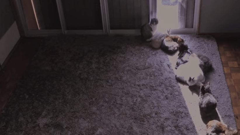 まるで「猫日時計」!日光に貪欲なネコたちのタイムラプス映像!!