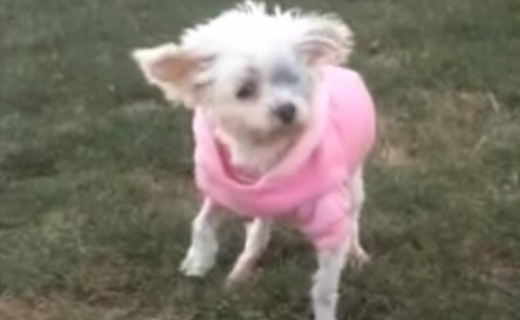 12年間檻の中に閉じ込められていた犬、生まれて初めて大地を歩く。戸惑う姿が心に突き刺さる