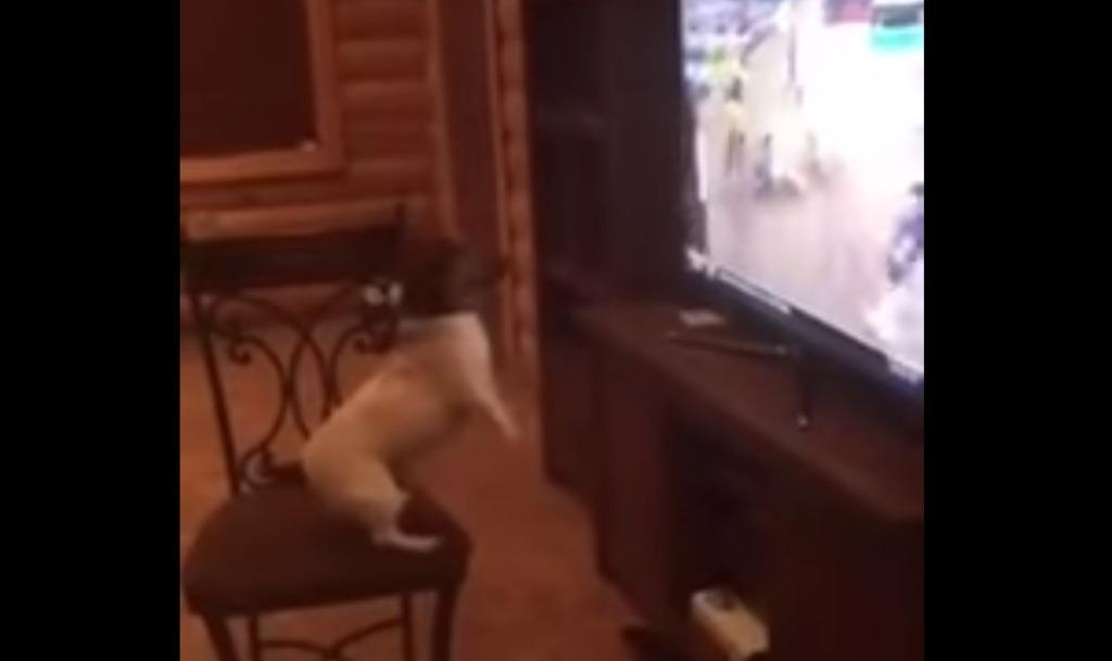 ロデオの映像を見せたら、ロデオっぽい動きになってしまったワンちゃんwwwwwwww