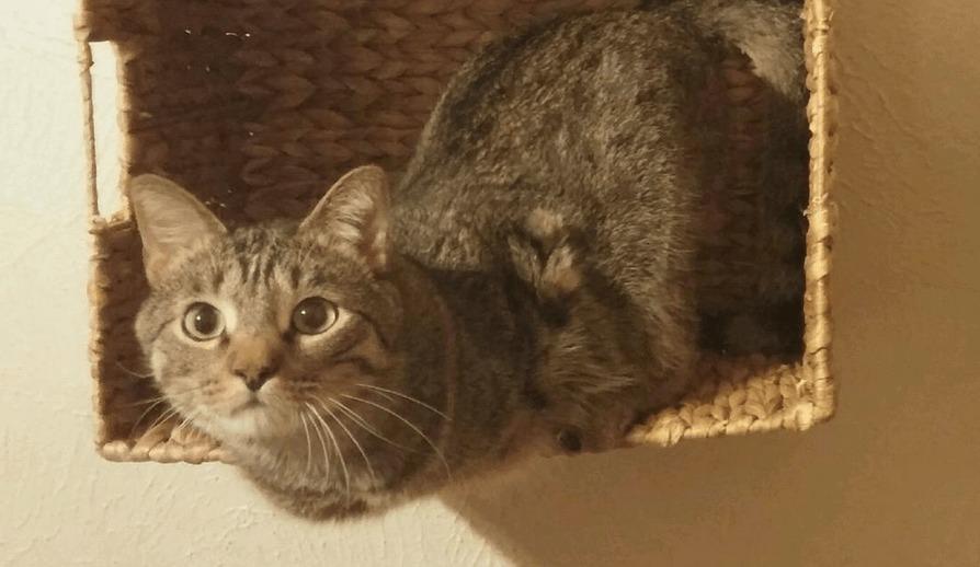 両前脚を失った猫。ハンディキャップを全く感じさせない元気っぷりに、勇気をもらう!!