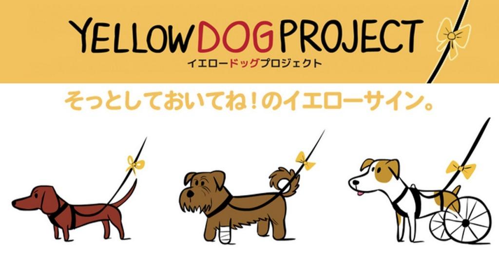 黄色いリボンの犬を見かけたら、そっとしておいてあげてください。「イエロードッグプロジェクト」を広めよう