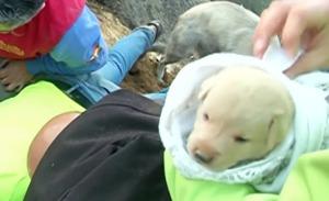 【奇跡】火事にあった母犬、とっさの判断で9匹の子犬を土に埋め助かる!!