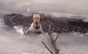 【感動】凍った川に落ち、絶望的な悲鳴をあげる犬を救ったレスキュー隊!!