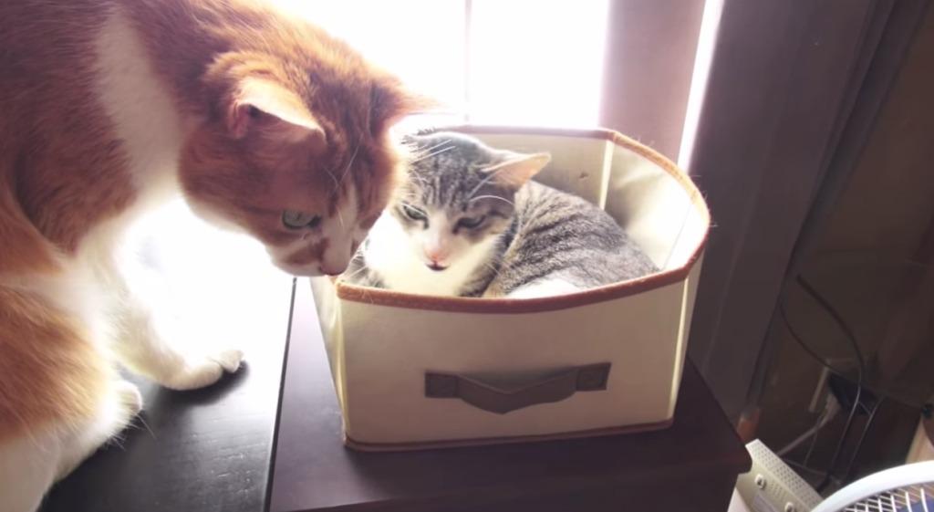 近頃の若猫には感心ニャー!年配の猫に席を譲る若猫がエライと話題に!!