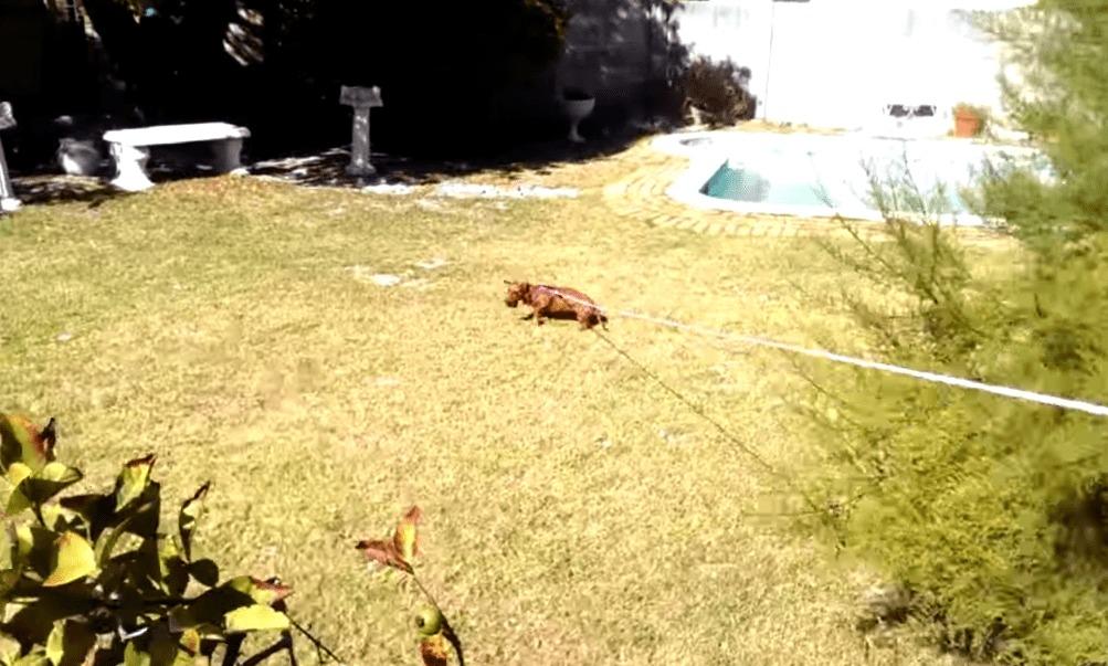 【爆笑】隣の家に入ってしまったボールを回収する、まさかの方法!!
