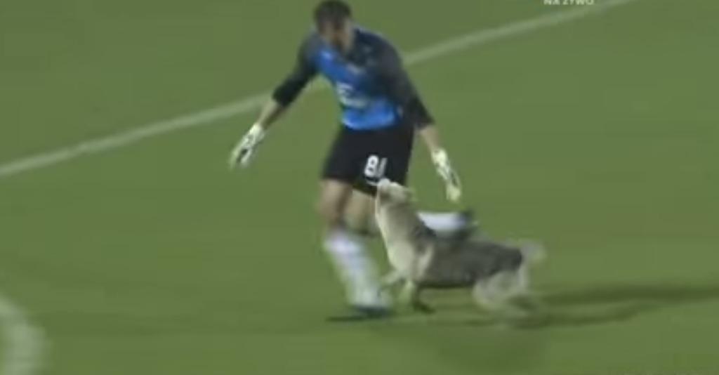 サッカーの試合に乱入してきた犬。誰も手を付けられない暴れん坊を、優しく手懐け誘導した紳士的なキーパー!