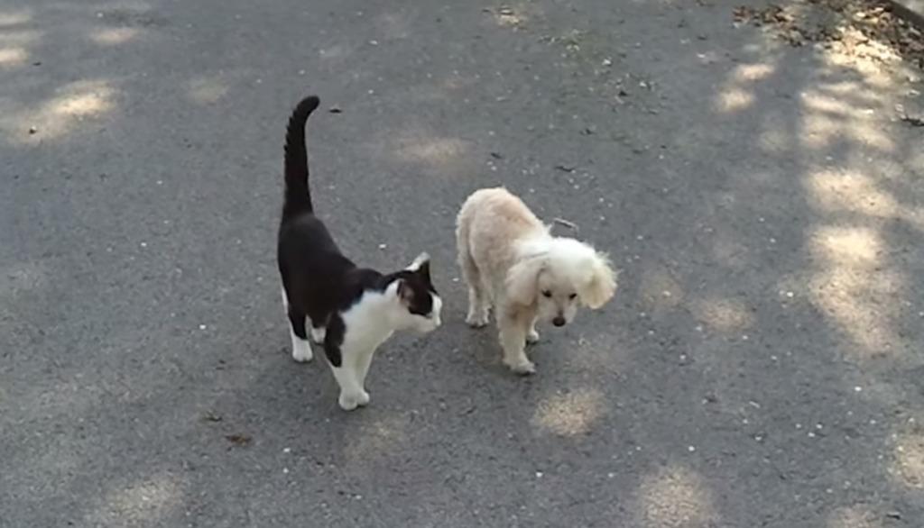 【感動】二人は仲良し!盲目の犬を誘導して一緒に散歩してあげる猫!!