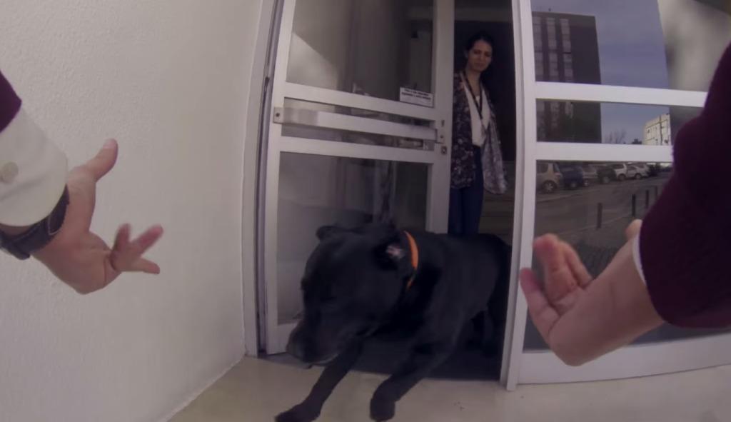 【爆笑】愛犬と感動の再会!と思ったら笑撃の結末にwwwwwwww
