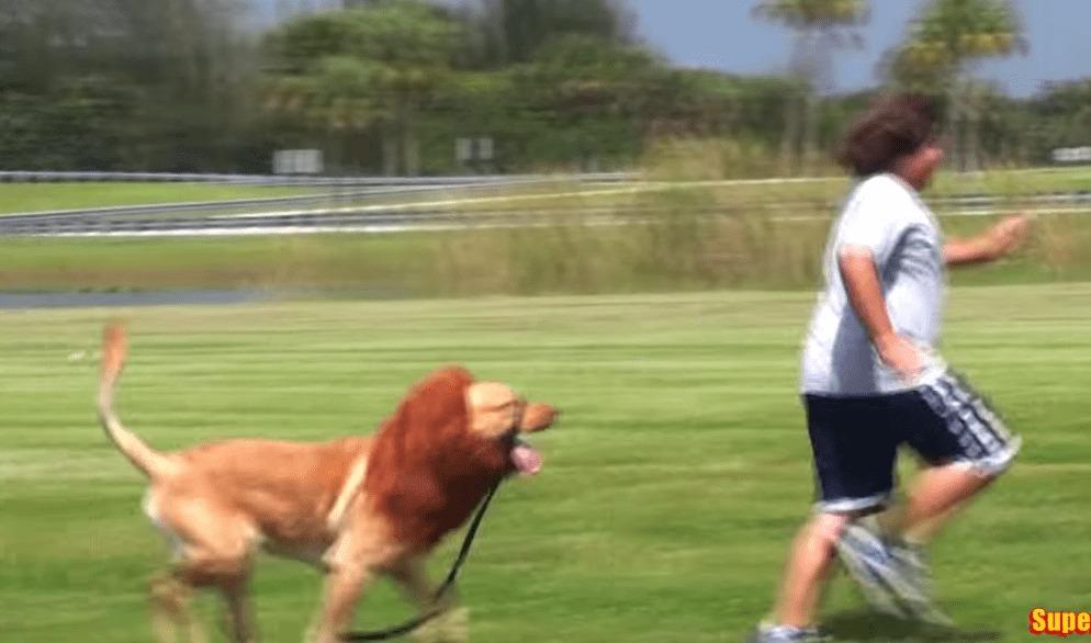 【爆笑】犬にウィッグを付けてライオンぽくするドッキリが面白いwwwwwww