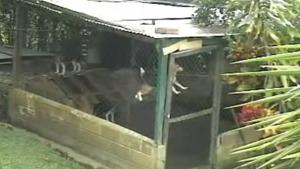信じられない方法で犬小屋からの脱出を試みた犬!!