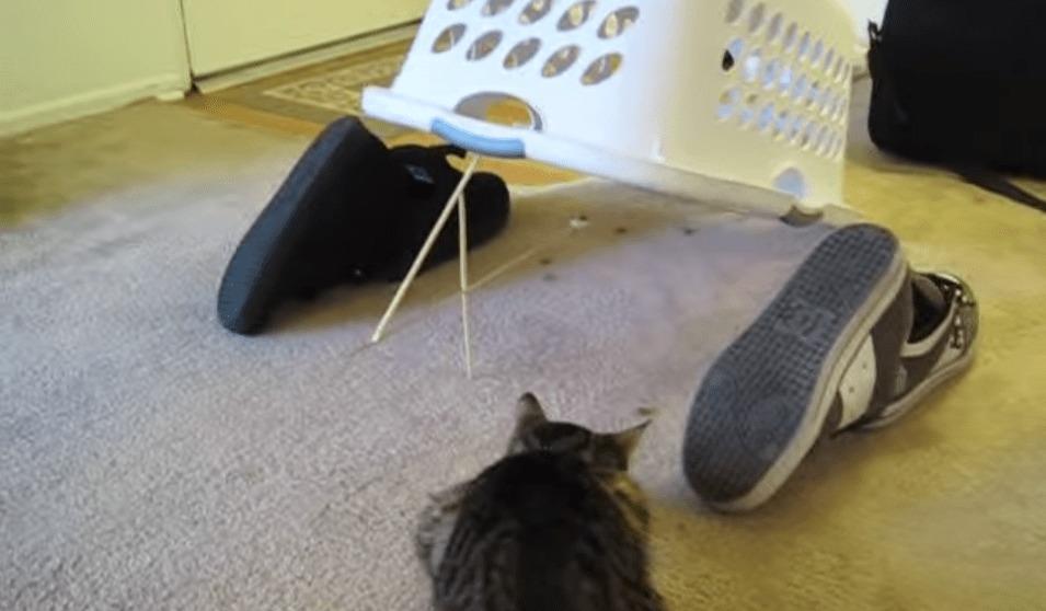【爆笑】猫に古典的なトラップを仕掛けてみた結果wwwwwww