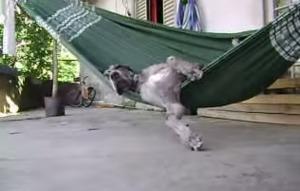 【爆笑】やる気のなさすぎる犬wwwwwwwww