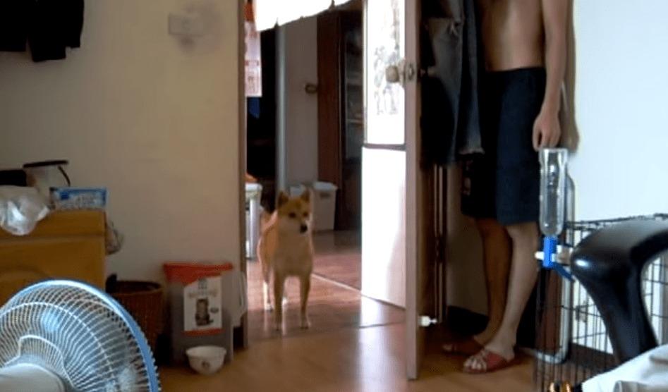 部屋の中で犬たちと隠れんぼ!見ているだけで超なごむ動画