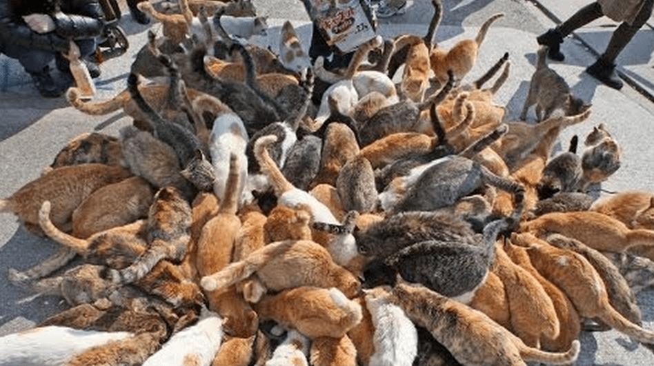 島民15人に対して100匹以上の猫が生息する瀬戸内海の「猫の楽園」がスゴい!!