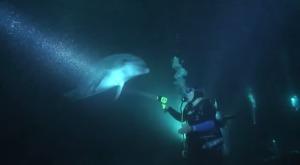 夜間撮影をしていたダイバーに一匹のイルカが寄ってきた!よく見ると釣り糸が!奇跡の救出劇!!