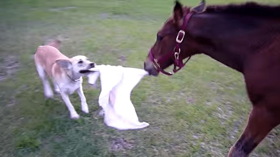 子馬と犬が仲良く鬼ごっこ!種を超えて仲良く楽しそうな二人の姿が微笑ましい!