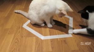 あの「猫転送装置」こと猫ホイホイに捕らわれた猫が仲間ニャンコにより救出!!