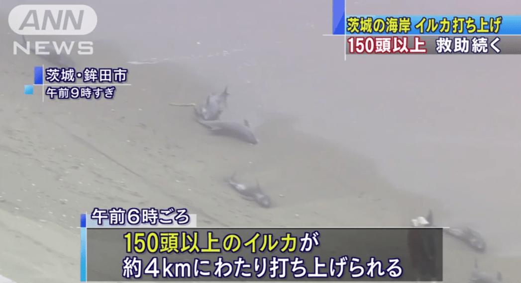 地震の前兆?!茨城の海岸にイルカ150頭が打ち上げられる!!!