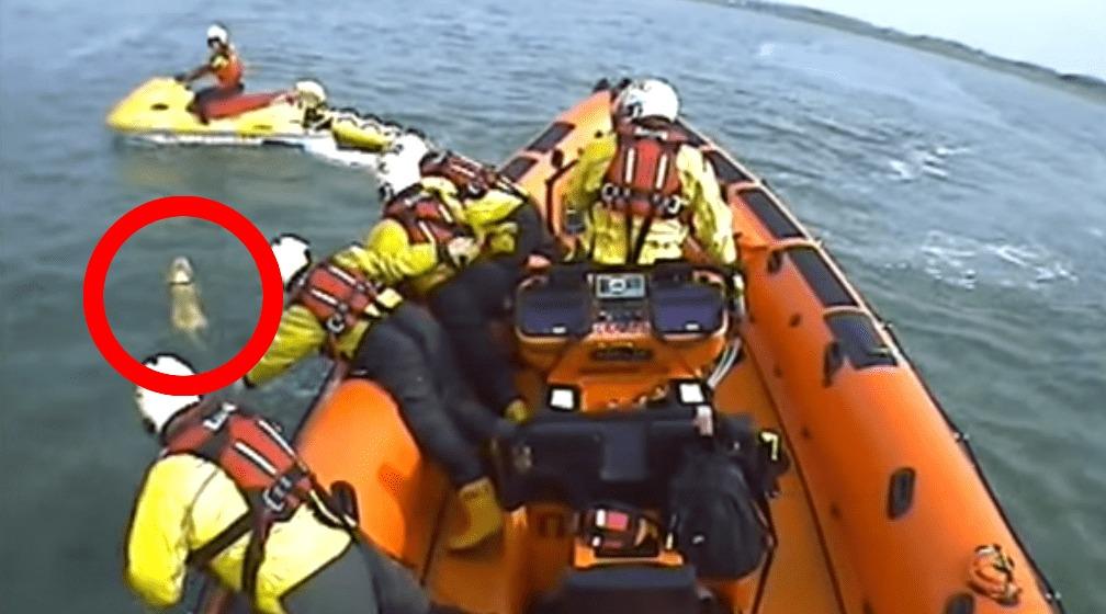 沖に流されたワンちゃん、一生懸命泳いでいるところを救助される!!