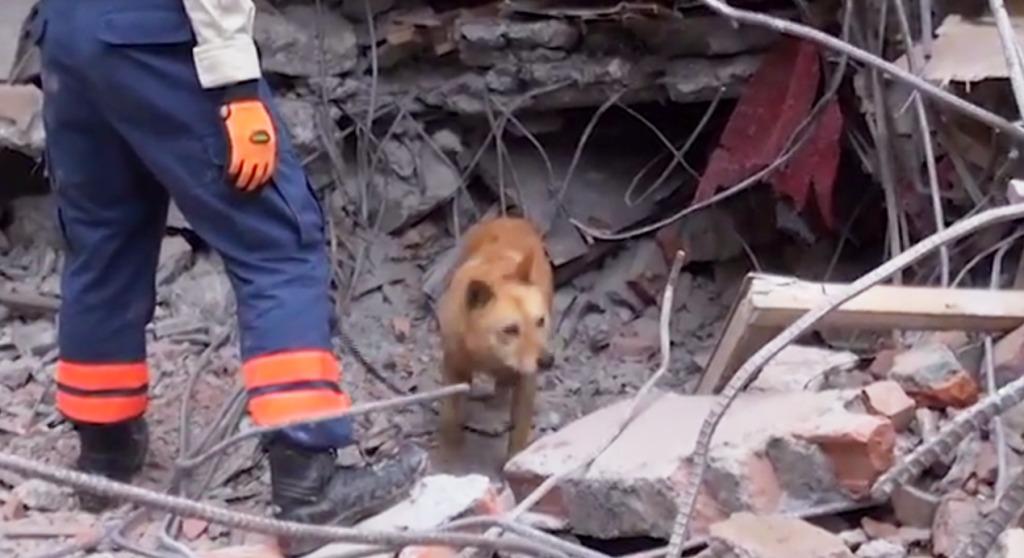 殺処分寸前だった犬「夢之丞」。ネパール大地震でも災害救助犬として大活躍!!