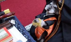 チーン!犬住職が大人気?!彼が念じる理由とは?