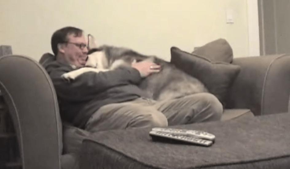 大きな体だけど甘えん坊!飼い主さんのことが大好きな犬が可愛いw