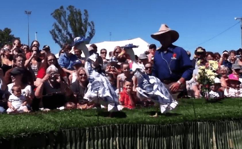 オーストラリアで毎年開催されている「アヒルのファッションショー」が可愛いwwwwww