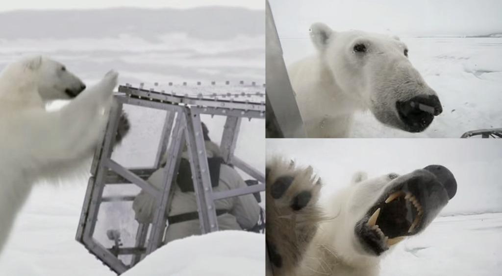 BBCのカメラマンが小さな透明ボックスに入って「シロクマ」と超接近!可愛いけど怖すぎる!!