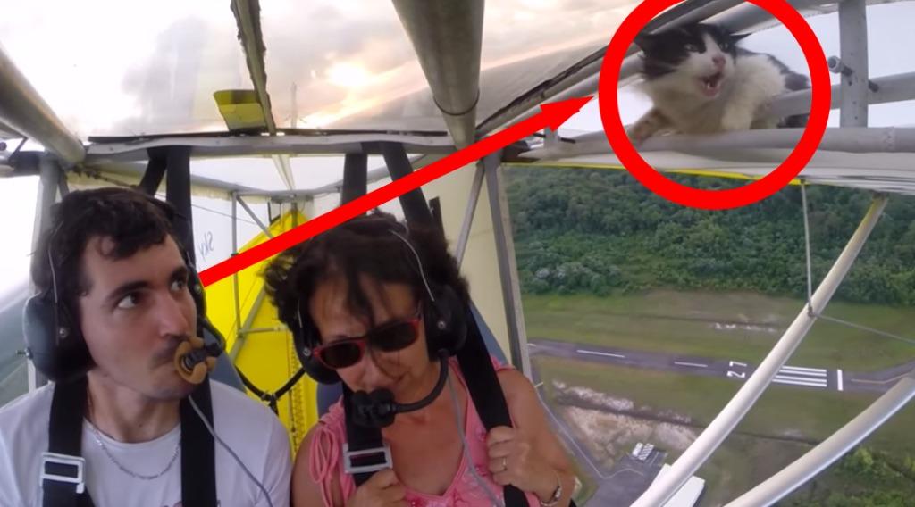 グライダーで飛行中、翼の中に隠れていた猫が唐突に現れてビックリ!!!